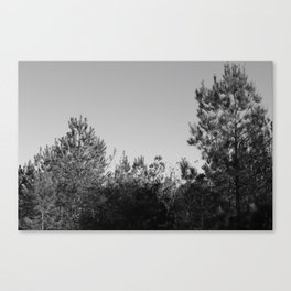 In Your Backyard Canvas Print