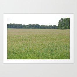 Peaceful Wheat Art Print