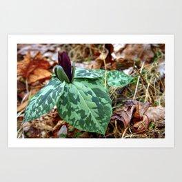 Spring Trillium Fine Art Print, Botanical Art, Nature Print Art Print