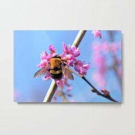 Eastern Redbud And The Bee Metal Print