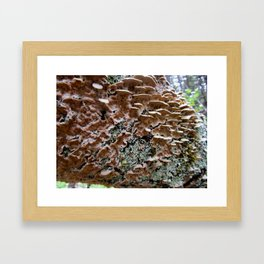 Fungi on a Fallen Tree Framed Art Print