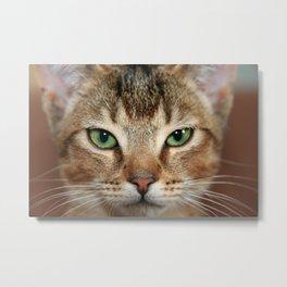 Face of Brown Cat Metal Print