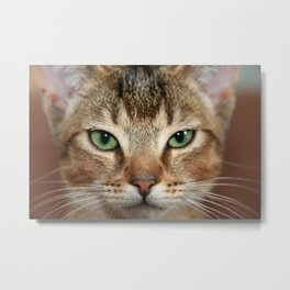 Face of Brown Cat Metal Print