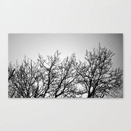 treelines Canvas Print