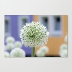Summerfeeling in the city Canvas Print