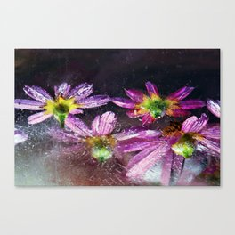 Coreopsis in Ice Canvas Print