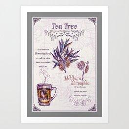 Tea Tree Botanical Art Art Print