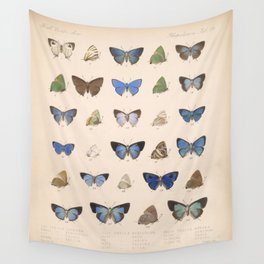 Vintage Hand Drawn Scientific Illustration Insects Butterfly Anatomy Colorful Wings Wall Tapestry