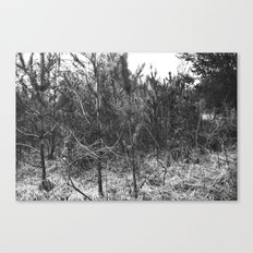 BLACK AND WHITE // TREES Canvas Print
