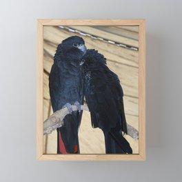Black Cockatoos Framed Mini Art Print