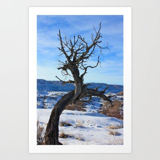 Old Cold Juniper Art Print
