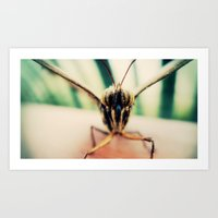 moth Art Prints featuring moth by Sookie Endo