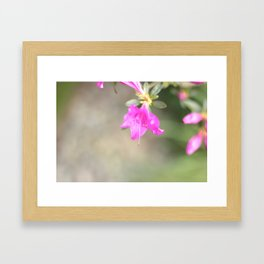 Garden Flowers Framed Art Print