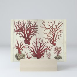 Naturalist Red Coral Mini Art Print