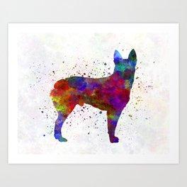 Australian Stumpy Tail Cattle Dog in watercolor Art Print