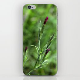 Pink Lipstick Flower Buds iPhone Skin