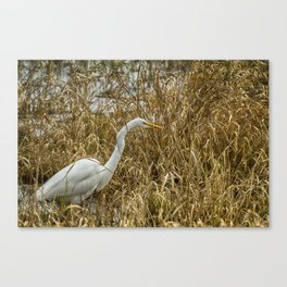 Great Egret Among the Rushes Canvas Print