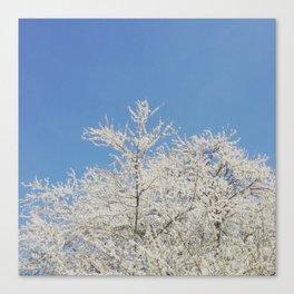 White blossoms in Stuttgart, Germany Canvas Print