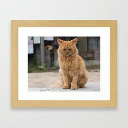 Wild ginger cat on Ogijima island in Japan Framed Art Print