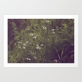 Sunlit Flowers Art Print