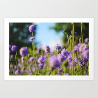 Purple delish - Flowers in a field Art Print
