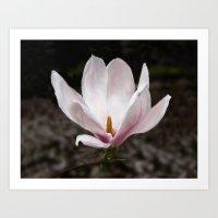 magnolia Art Prints featuring Magnolia by Guna Andersone & Mario Raats - G&M Studi