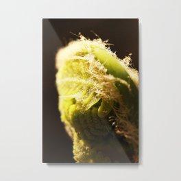 fiddle head fern  Metal Print