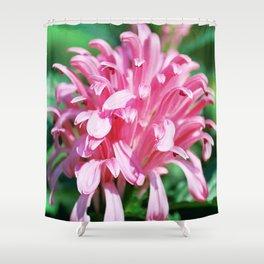 Brazilian Plume - Justicia carnea (Jacobinia carnea) Shower Curtain
