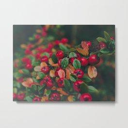 Tiny Winter Berries Metal Print