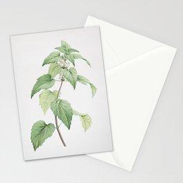 Vintage White Dead Nettle Plant Illustration Stationery Cards