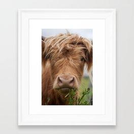 Highlander Cow Framed Art Print