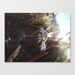 and the flower Canvas Print