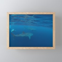Chasing giants (diver and 2 whale sharks) Framed Mini Art Print