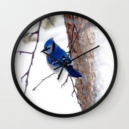 Blue Jay in winter 2 Wall Clock