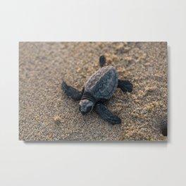 Baby Sea Turle Metal Print