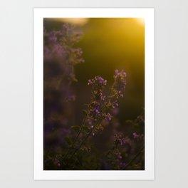 Fuchsia Glow Art Print