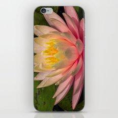 Flower Series 3 iPhone & iPod Skin