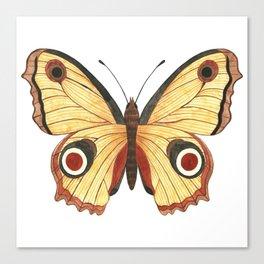 Juno Butterfly Illustration Canvas Print