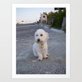 Coton in the Keys Art Print