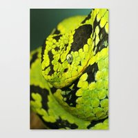 snake Canvas Prints featuring SNAKE by Ylenia Pizzetti