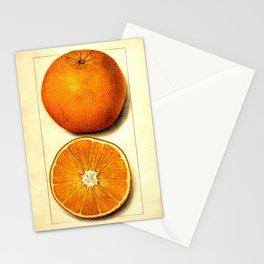 Vintage Botanical Navel Orange Stationery Cards