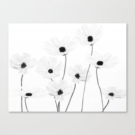 black and white cosmos Canvas Print