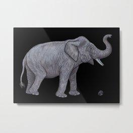 Borneo Pygmy Elephant Metal Print