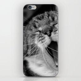 Cat yawn iPhone Skin