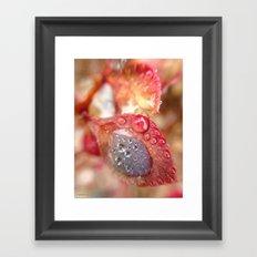Raindrops on Red Leaves Framed Art Print