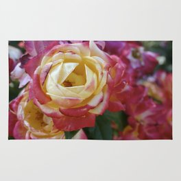 Pink and Yellow Roses Rug