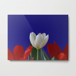 Red and White Tulips on Blue Metal Print