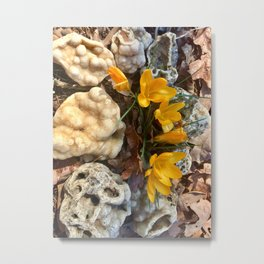 Yellow crocus flowers and Druzy Quartz Metal Print