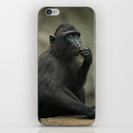 Celebes Crested Macaque Youngster iPhone Skin