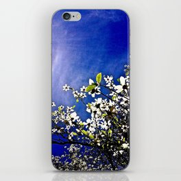Pacific Dogwood Blossoms iPhone Skin